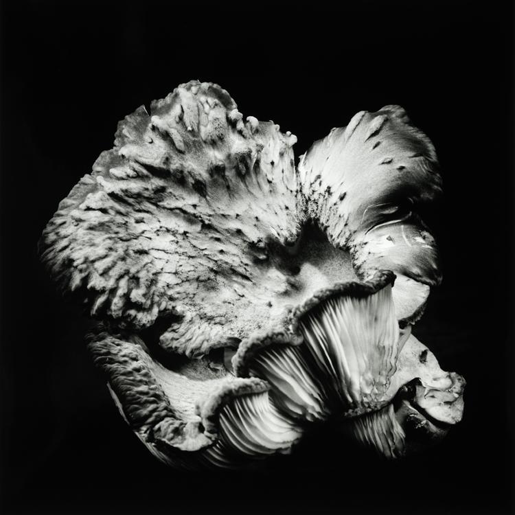 dejeuner. Dale M Reid Photography. Oyster Mushroom series. 2019.