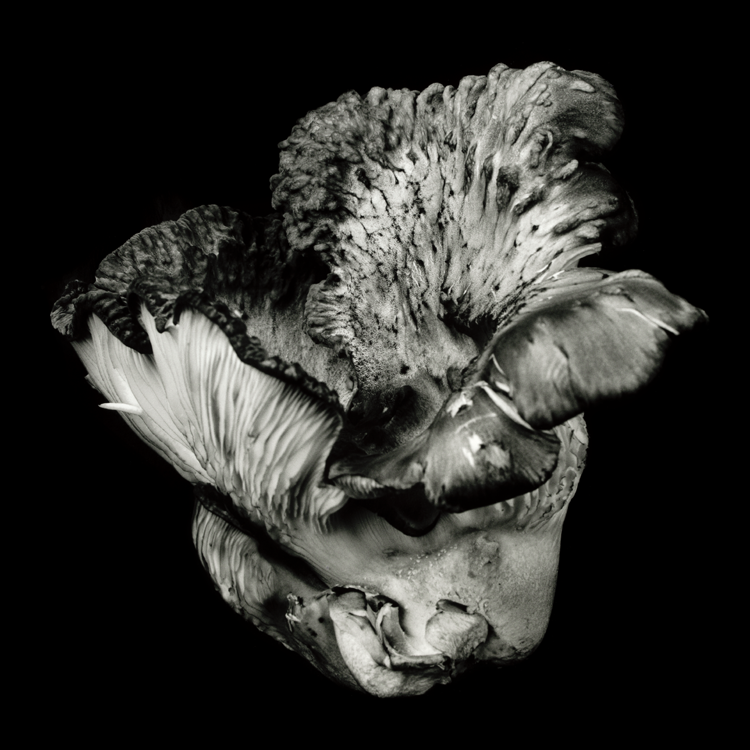 dejeuner. Dale M Reid Photography. Oyster Mushroom series. 2019.